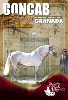 feria_caballo_armilla08.jpg