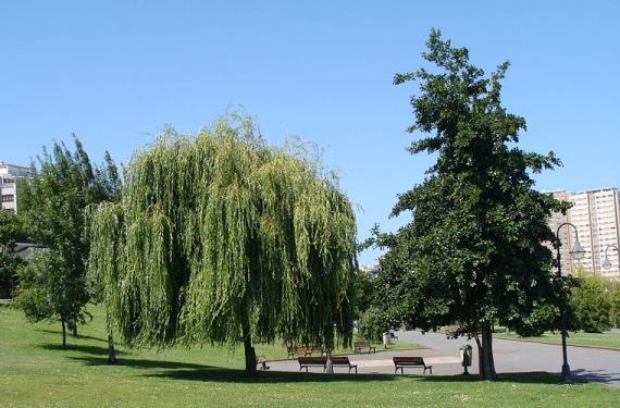 Parque en Coruña