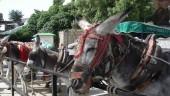 vista previa del artículo El burro-taxi de Mijas cumple 50 años