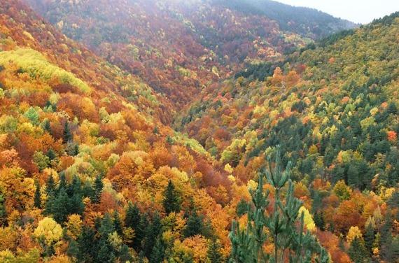 Bosque en Huesca